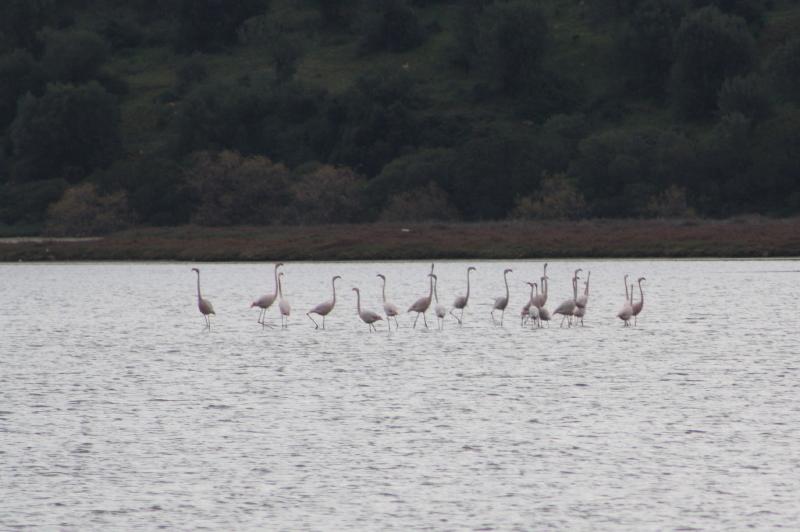 2438_IMG_9291 Flamingos